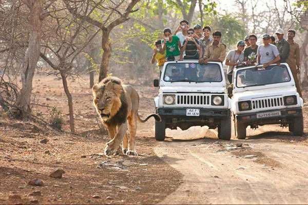 Car hire in sasan gir